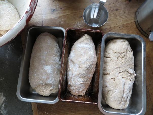 rising bread