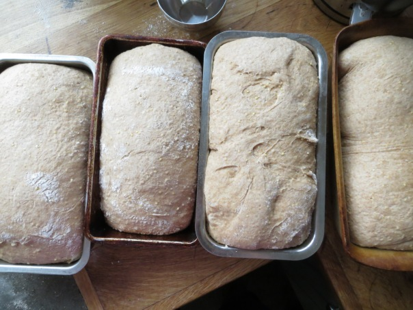 bread ready for oven