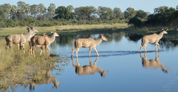 kudu reflection